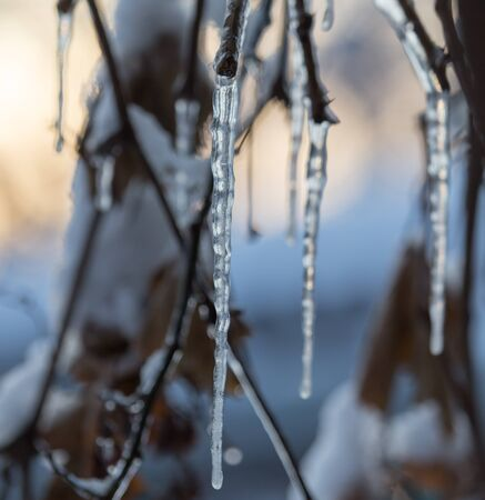 winter icicles on the sun dawn