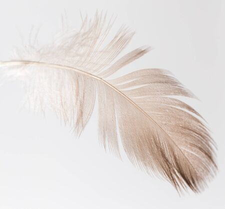 white feather: feather on a white background Foto de archivo