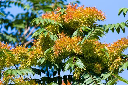 orange flowers on the tree in nature