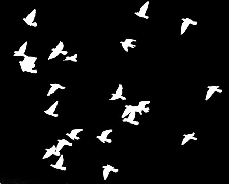 flock of pigeons on a black background Stock Photo