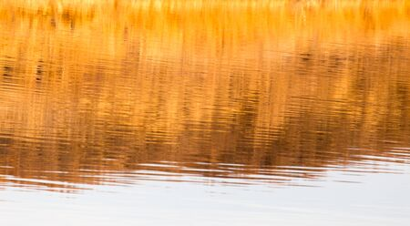 reflection in water: reflection of the yellow grass on the water as a background