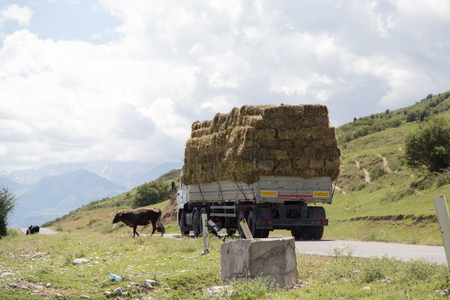 car laden with hay in nature Stock Photo