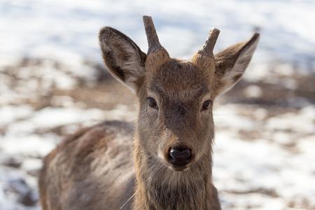 deer in the park in winter