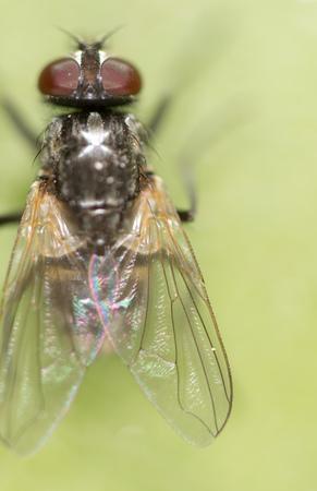 fly on a green leaf. macro