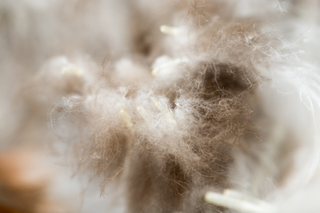 airy texture: duck feathers as a background. macro