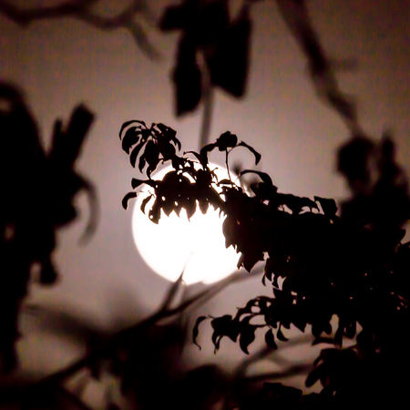 tree branch on a background of the moon