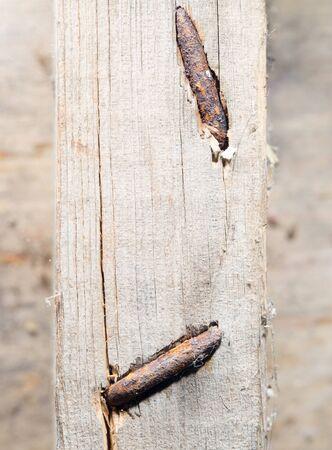 rusty nail: a nail into a board