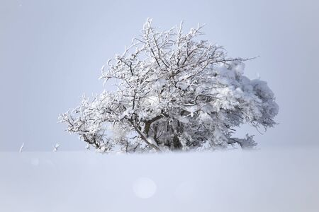 onset: winter tree in nature