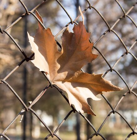 leaves on the wire fence