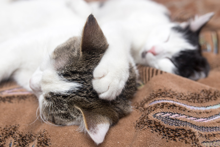 sweetly: Two cats sleep sweetly on the couch Stock Photo