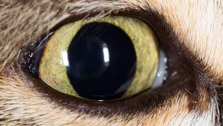 Open cats eye as a background. macro Stock Photo