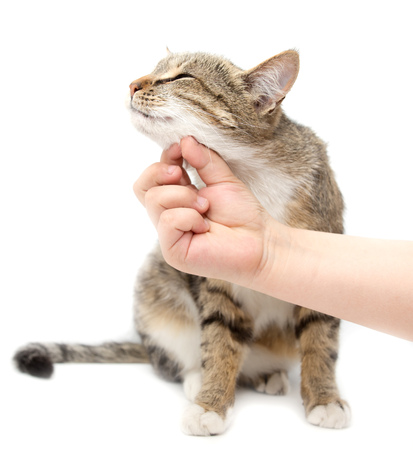Man caresses a cat on a white background . Stock Photo