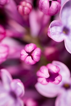 Beautiful little flowers of lilac as background. macro