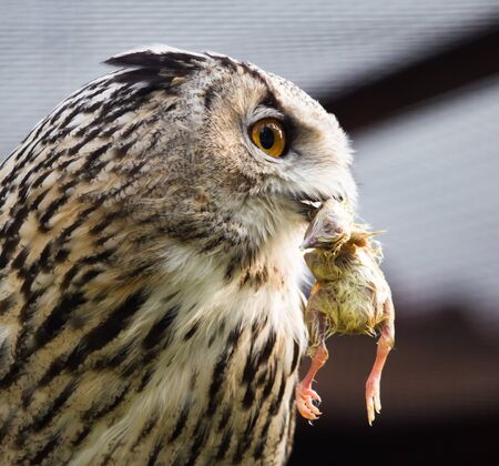 babies: Owl eats chicken at the zoo for lunch