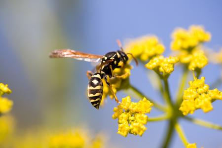 自然の中の黄色い花に蜂。マクロ