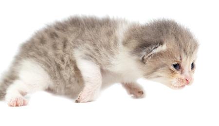Portrait of a newborn kitten on a white background