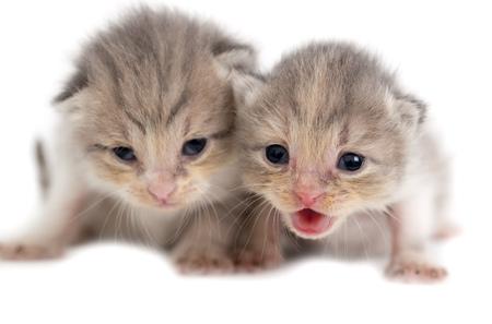 Two newborn kitten isolated on white background .