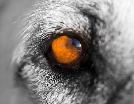 The eye of a big dog. macro Stock Photo