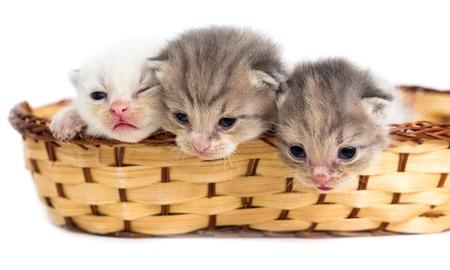 Three newborn kitten in a basket on a white background .