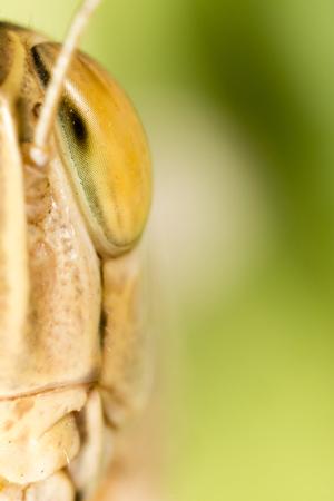 A portrait of a grasshopper in nature. macro Stock Photo