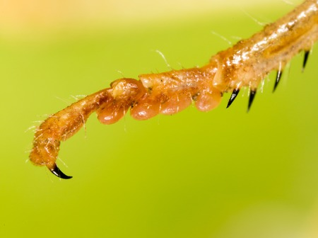 The grasshoppers paw on the nature. macro Stock Photo
