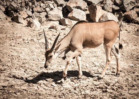 Life of an antelope in a deserted park Stock Photo