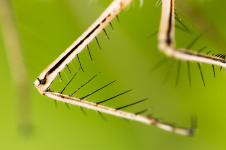 Hair on the clutches of a dragonfly. macro