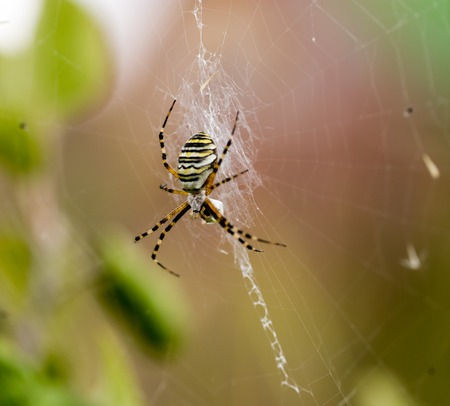 spider on the web in the open air