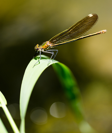 background: dragonfly in the park in nature
