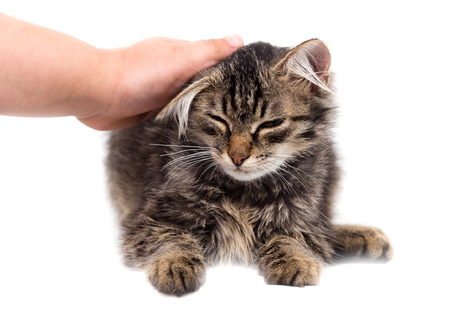 hand caressing a cat on a white background . Stok Fotoğraf