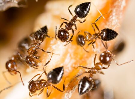 small insects are ants in nature. macro Stock Photo