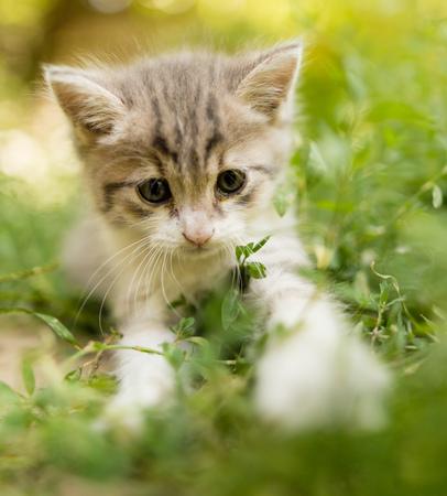 little kitten is walking in green grass outdoors .