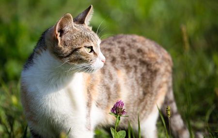 gray: cat walks in the grass in nature