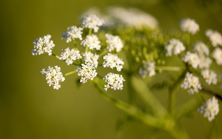 small white flowers on a plant in nature . Stock Photo