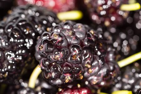 black mulberry berry as a background. macro