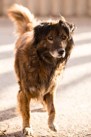 stray dog on the road in the city . Stock Photo