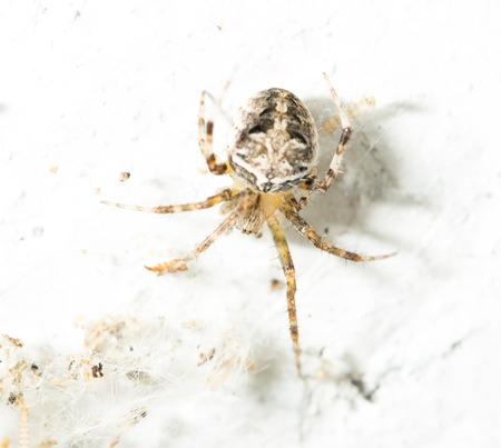 spider on white wall. macro . Stock Photo