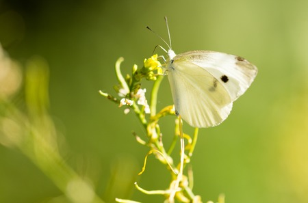 Butterfly on a yellow flower in the nature . Stock Photo