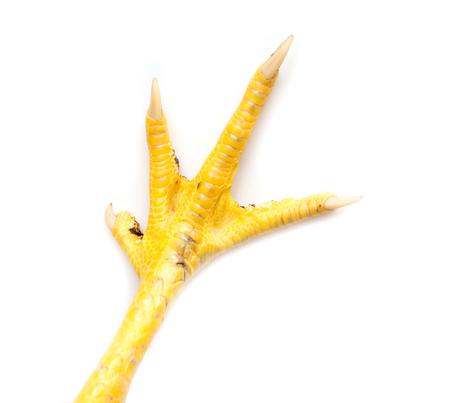 흰색 배경에 고립 된 노란색 발 닭