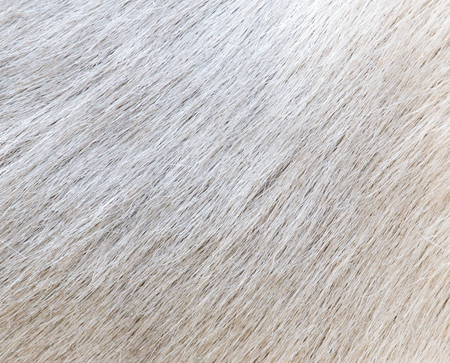 background of sheep skins