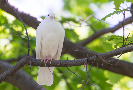 White doves on a tree in the summer . Stock Photo