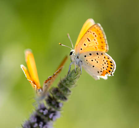 Beautiful butterfly in the wild on a plant. Macro