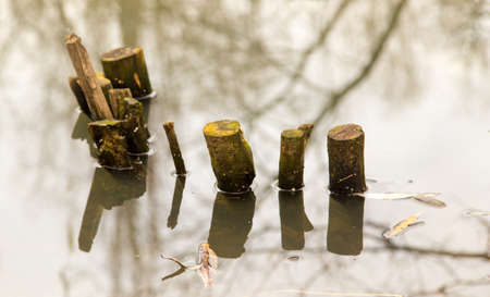 Bren from trees in water with reflection .
