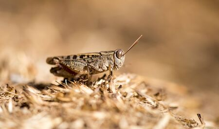 Grasshopper sits on the ground in wildlife . Stock Photo