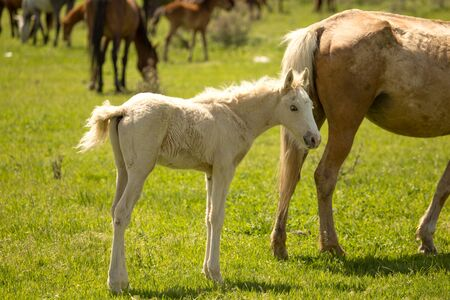 Horses in the pasture in the spring . Stock Photo