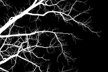 Naked tree branches on a black background .