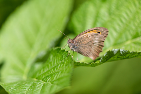 Butterfly on a green leaf in nature. Macro