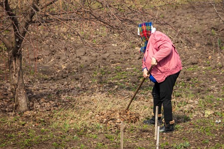 Woman removes leaves from the soil in the garden .