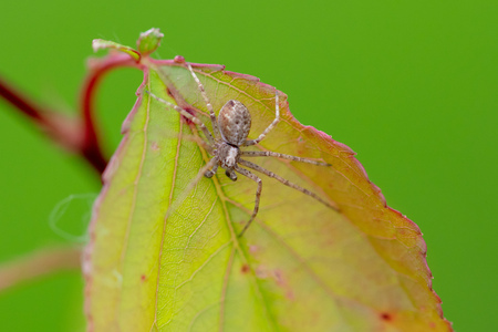 A spider on a leaf of a tree in nature. Macro