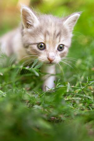 Portrait of a kitten in green grass . Reklamní fotografie